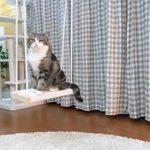 チャレンジャー精神満載!ブランコに乗ろうと悪戦苦闘する猫