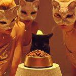 ヤマト運輸が公開!ダンスミュージック風にリメイクされた「ネコふんじゃった」のミュージックビデオ