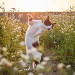 躍動感たっぷり!生き生きとした外猫の魅力が溢れるおもしろ猫写真11選