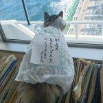 一風変わった暮らしを満喫!乗組員さん全員から愛されるキュートな船乗り猫