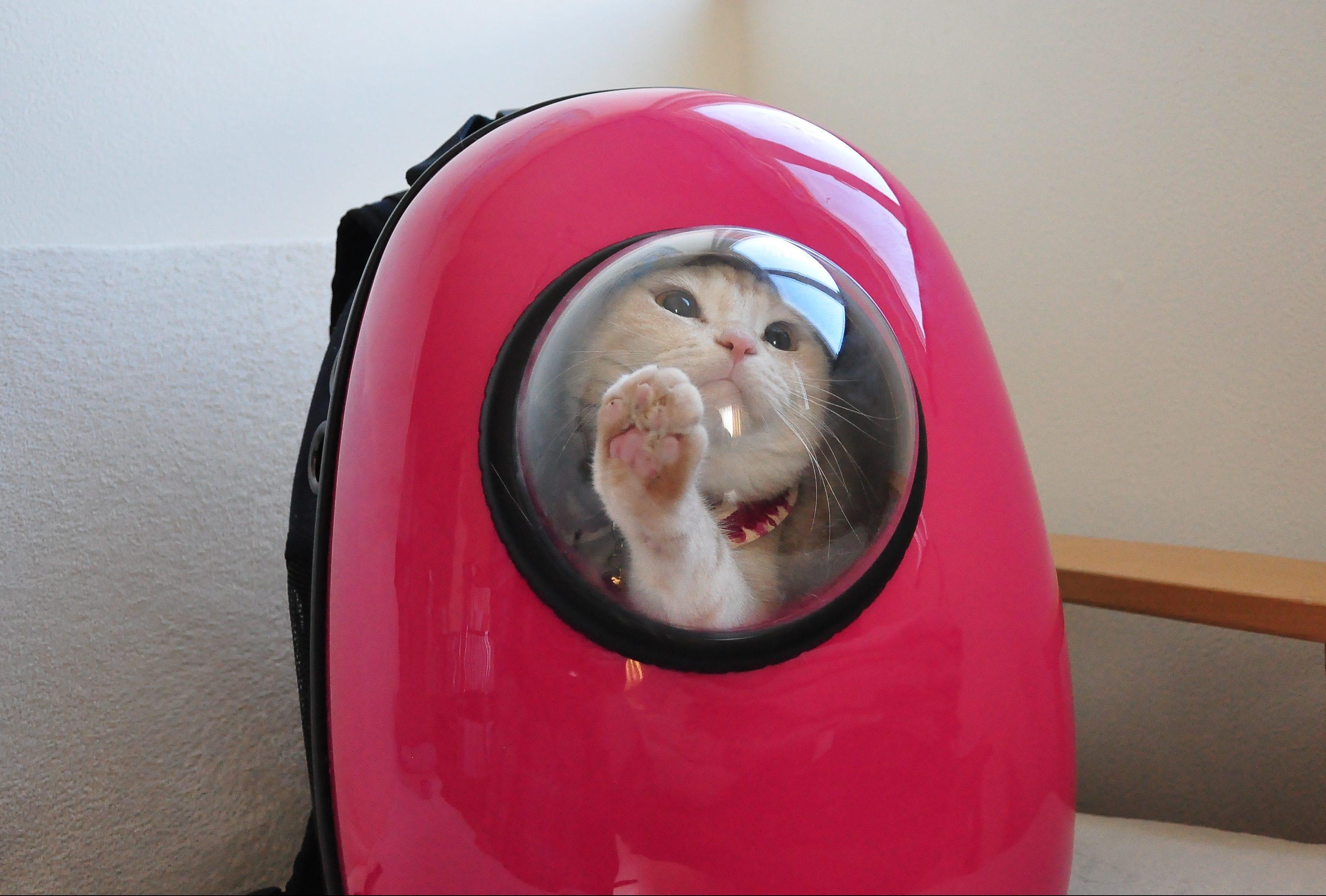 猫 リュック 窓