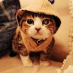 猫も人も幸せになれる癒し空間!天使たちに逢えるカフェウリエルに行ってみた!