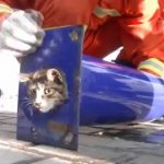 パイプの中の猫を助けたい!優しい消防士さんたちの愛情溢れる救助活動