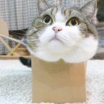 体より小さい箱 vs まるちゃん!一見入れたかと思いきや・・
