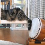 芸術の秋を楽しむ猫が出現!?ブランコに乗りながら和太鼓演奏にチャレンジ