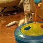 器用なチラ見ポーズもユニーク!無邪気な新入り子猫を気にしすぎる先住猫