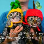 猫界にもブーム到来!?ピコ太郎もメロメロになるほどキュートなPPAP猫たち