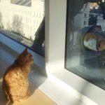 猫マスクを被った窓拭きおじさんたちと猫のコミュニケーション風景