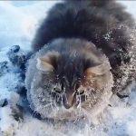 -35℃のロシアで足が凍って動けなくなった猫の救出までの1分間
