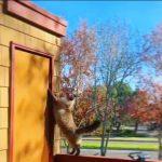 ハラハラドキドキ!壁をよじ登るもあっけなく落下するドジっ子ネコ