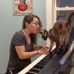 嫌な予感が的中!飼い主さんのピアノ弾き語りに猫が乱入し・・・