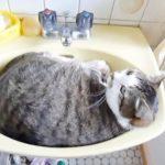 洗面所が癒し空間に!キュートな「おはよう」で寝起きの挨拶をする猫