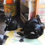 見よう見まねでお母さん猫と一緒に毛づくろいをする子猫