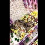 至福の極み!ペットショップに迷い込みマタタビの海に溺れる猫