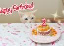 夢ちゃん2歳の誕生日!