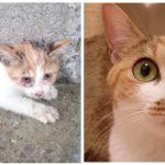 すっかり美猫に!半身不随だった保護子猫と先住猫のその後