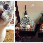 事件発生?! 猫から激しい襲撃を受けたひな人形が無残な姿に・・・