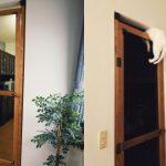 猫の賢さに爆笑!手作りの侵入防止扉設置後に待ち受けていた衝撃の結末とは?