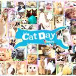 【2017年版】ねこ好き必見!!Twitterで話題の猫系アカウント59名を一挙大紹介