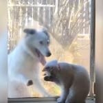 一方的な片思い!?毛づくろい中の美猫に構ってほしいアピールをするジャンプ犬