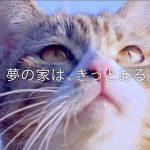 夢のデザイニャーズハウス!理想のおうちを探す旅に出た猫のCM