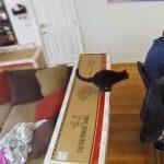 盛大なオチ!テーブルの書類に着地しそのまま滑って消えていく黒猫