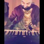 飼い主さんのピアノ演奏をウットリした表情で聴く猫ちゃん