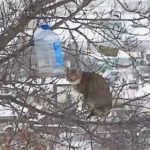 結末が気になる!不安定な木の上で鳥のエサを奪いたい猫の強奪作戦