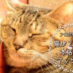 絆も深まる!今日から実践可能な猫がとろける極上マッサージ法