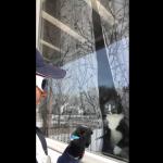 おうちの警備に励むにゃ!郵便配達員も楽しみになる猫のユニークな行動とは?