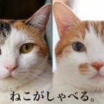 猫がしゃべる!?moshinukoさんの愛と工夫が詰まったネコ動画の数々