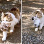 子猫を運ぶミケネコヤマト宅急便が出現!23匹の猫に囲まれた多頭飼い生活