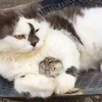 奇跡の友情?!仲良く一緒にお昼寝する猫とネズミのコンビ