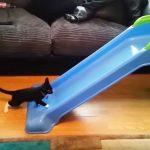 個性もさまざま!無邪気な子猫たちが見せるすべり台の楽しみ方とは?