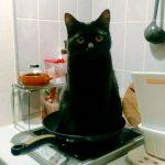 私を食べてにゃ!空腹の飼い主のために自らフライパンに入る黒猫
