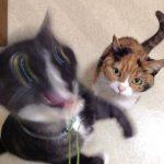 キュートな衝撃写真をチェック!大好物の猫草を前にして荒ぶるコミカルにゃんこ