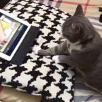 将来はパン職人!?お手本動画を見ながら生地作りのイメトレに励む猫