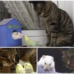 心のデトックス効果大!猫と鳥とハムスターが戯れる平和な世界