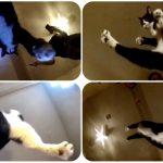 これは新感覚!猫ジャンプを下からスローモーションで見ると凄いことに!