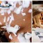 楽しさ爆発!やんちゃ盛りの子猫たちに大量の紙切れを降らせるとこうなる