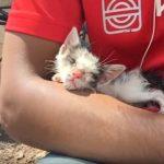 深い愛情に感動!ガリガリに痩せ細った子猫が幸せにゃんこになるまでの成長記録