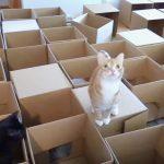 リビングが最高の遊び場に!50箱もの段ボールを使って作られた猫用の巨大迷路