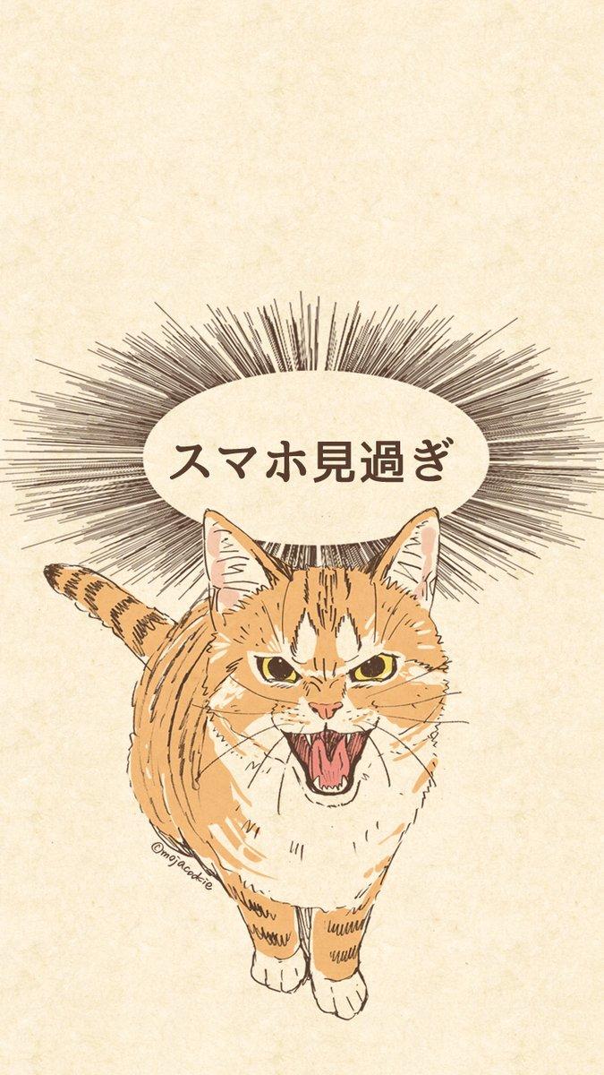 画面越しでにやにやが止まらない!猫に叱られたい人におすすめな