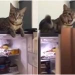 猫さんが怒りのパンチ連打!冷蔵庫のドアが閉まるのがどうしても許せない