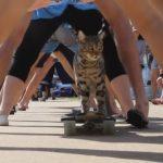 スケボー猫のブーマー君が連続股下くぐりのギネス世界記録を達成!