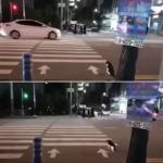 横断歩道は青信号で渡るニャ!交通ルールをばっちり遵守するスーパーニャンコ現る!