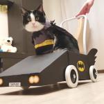 バットマンならぬバットニャンが飼い主自作のバットモービルを乗りこなす!