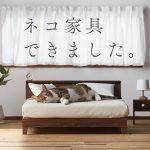 家具職人さんの本気が集結!飼い猫へのプレゼントにもおすすめなネコ専用の「ネコ家具」
