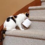 なぜか一生懸命トイレットペーパーを2階へ運ぶニャンコ!