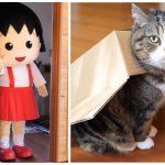 箱に滑り込む猫「まる」がちびまる子ちゃんと夢のコラボ!ドキドキの初対面は!?